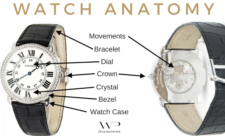 watch anatomy
