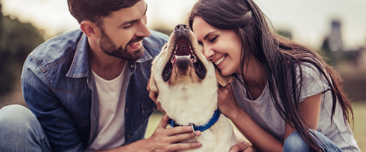 involve your pets in the proposal